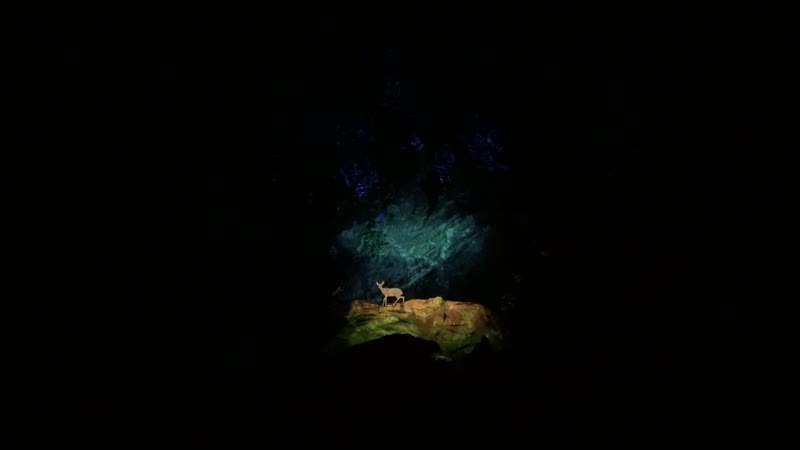 Вечернее шоу в парке Animal Kingdom – Проекция на Древо Жизни –2