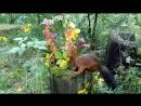Белка на природе красивый фон. Гербарий из растений, цветов и листьев.