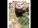 Кыздар ай ерiккеннен тыша алмай журсiндерго
