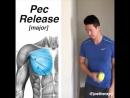 Релиз большой грудной мышцы и развитие подвижности грудного отдела позвоночника