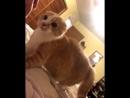 Бедный кот 😂🤣😂