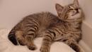 The Adventures of Oskar the Blind Cat and Klaus - Episode 1 - Baby Oskar