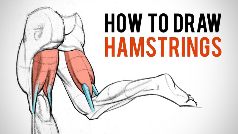 How to Draw Hamstrings - Leg Anatomy for Artists