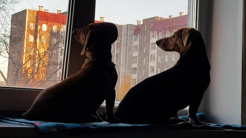 Птички за окном.