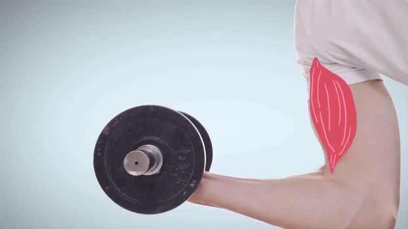 Должны ли болеть мышцы после тренировки чтобы расти ljk ys kb jktnm vsiws gjckt nhtybhjdrb xnj s hfcnb ljk ys kb jktnm vsiws g