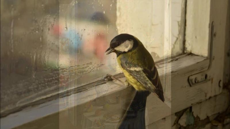 Буктрейлер на книгу Л.Н. Толстого Птичка