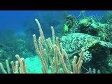 Карибские острова Погружение с акулами 3D трейлер