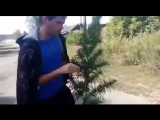 Нарик с елкой или .....