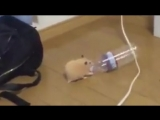Патимейкер (VHS Video)