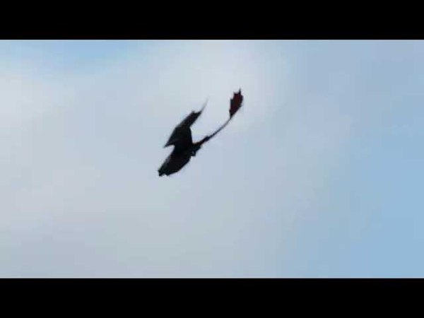 Night Fury Flyby (HTTYD fan animation)