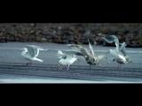 Emeli Sande - My kind of love (Vibers Remix)