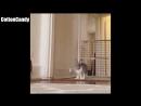 RIP Vine Compilation Animal Edition Part 3!.mp4