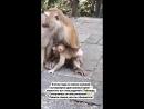 Тайские родичи