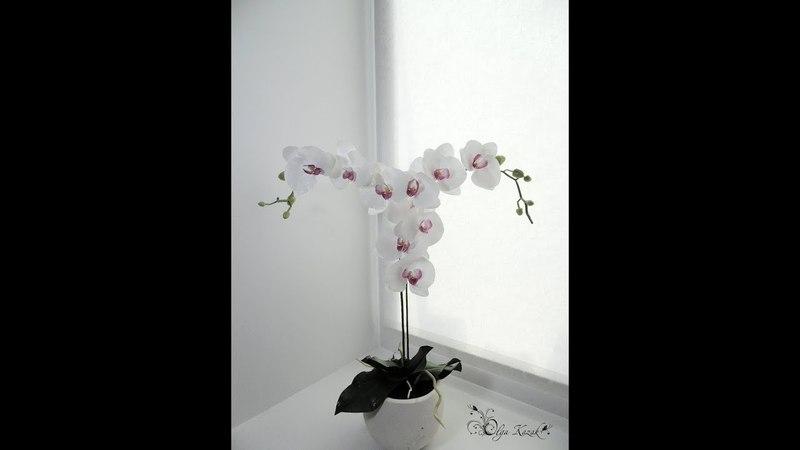 Мастер-класс Орхидея Фаленопсис из фоамирана. Ольга Казак