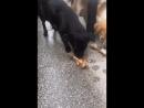 Собачья дружба....) OOL