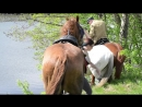 Ходят кони над рекою, Ищут кони водопою, Но к речке не идут, Больно берег крут...