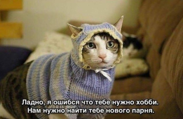 Мою кошку зовут Лиза, но на самом деле больше ей подходит Ибанько, если включить толерантность на максимум, то Дура. Лиза орет командирским голосом, этим она в мать. Хотя, кто знает, может и