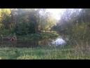 Охота на Бобра. Река Лобь.Волоколамск.Охотник.