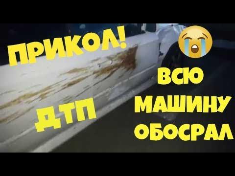 АВАРИЯ С МЕДВЕДЕМ Медведь обосрал всю машину ПРИКОЛ