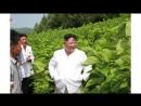 경애하는 최고령도자 김정은동지께서 운곡지구종합목장을 현지지도하시였다