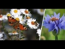 Rückgang um 75 Prozent: Dramatisches Insektensterben hat schlimme Folgen