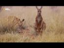 6 Дикая Австралия
