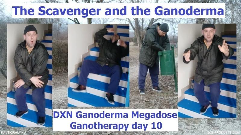 The Scavenger and the Ganoderma: DXN Reishi Mushroom Powder Megadose - Ganotherapy day 10