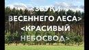 🌍 ЗВУКИ ВЕСЕННЕГО ЛЕСА КРАСИВЫЙ НЕБОСВОД SOUNDS OF A SPRING FOREST BEAUTIFUL SKY