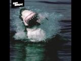 Акула съела морского котика – Планета Земля