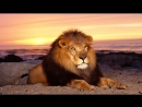 Фото Фильм В Мире Животных 14