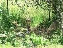 Амурские дети-сироты отдыхают и трудятся в Хинганском заповеднике.mp4