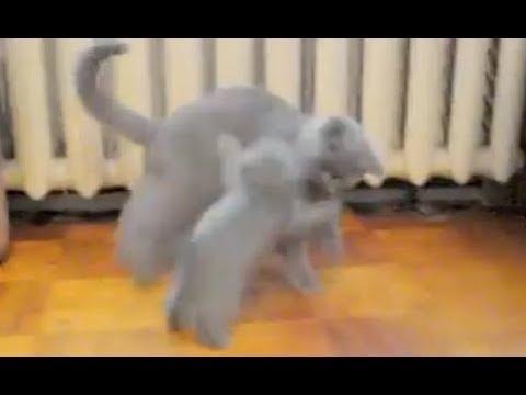 Коты борцухи