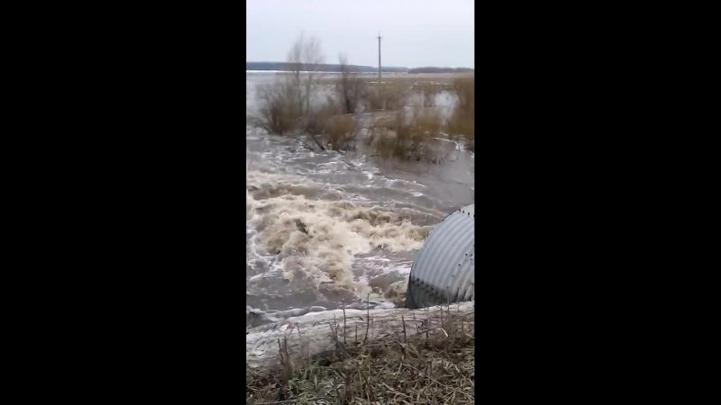 Видео2 от Витман В Э Варваринский мост 7 апреля 2018