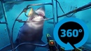 Shark Cage VR 360° Video Experience