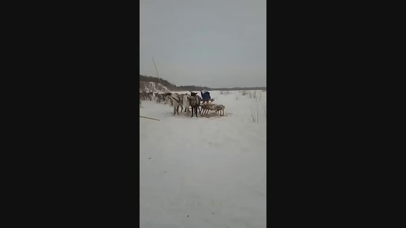 Галина Пяк Live