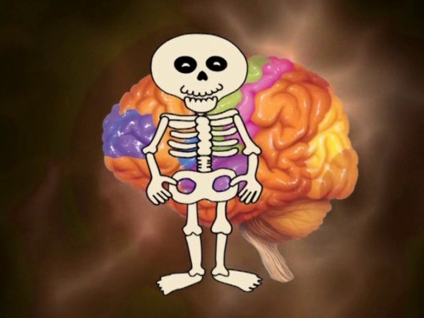 Анатомия человека для детей обучающее видео