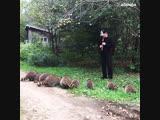 Лесной концерт для енотов