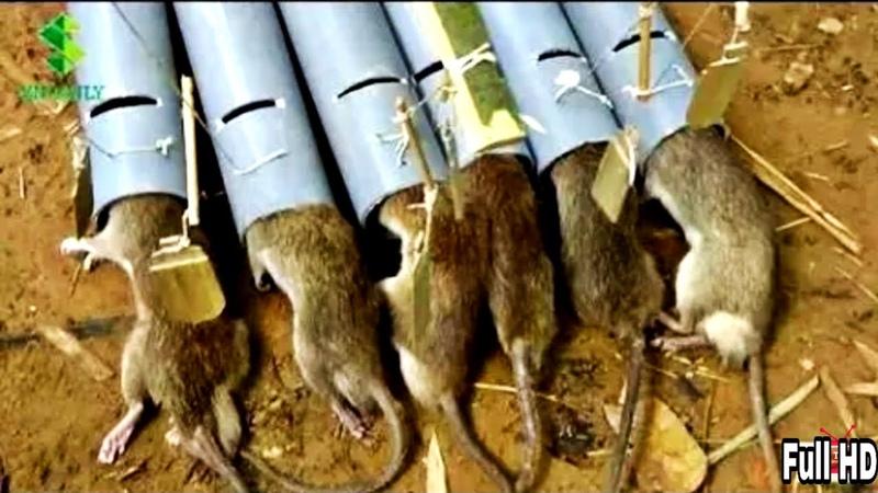 Kumpulan Jebakan Tikus Sederhana Paling Mematikan