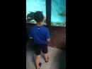 аквариум черного моря