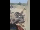 Syria ISIS has killed many Assad regime soldiers in the outskrits of Albu Kamal city. Regi