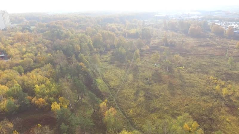 Радиополя в Некрасовке. Лес на территории бывших Радиополей.