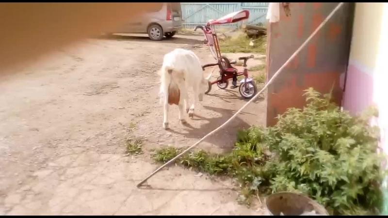 козюлька сжирает мусор