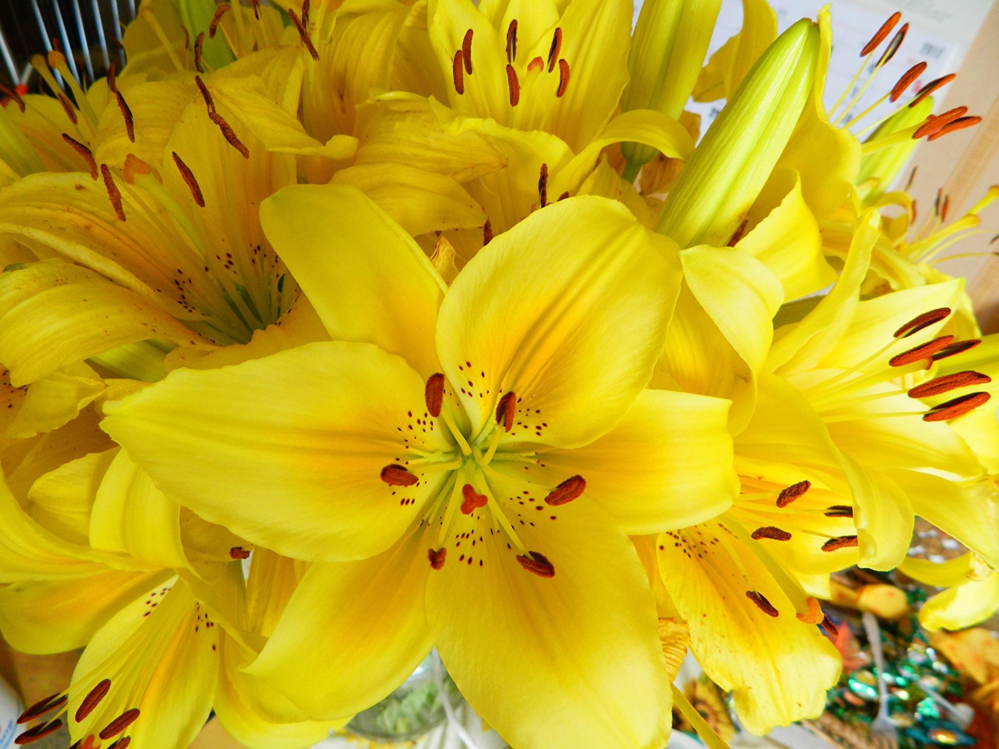 Почему мельчают цветки лилии?