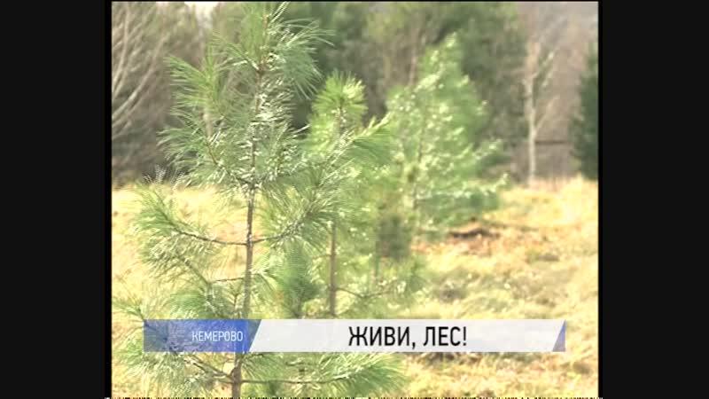 Сотней сибирских кедров пополнился ботанический сад города Кемерово в рамках акции Живи, лес!