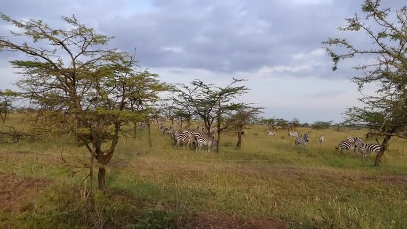 Serengeti лучший парк СУРОВОЙ ТАНЗАНИИ рекомендую ДЕНЬ-9 ч 1