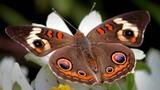Beautiful Butterfly 4K 2 Hours Relaxing Nature Sounds of Birds Relaxation Звуки Природы для Детей