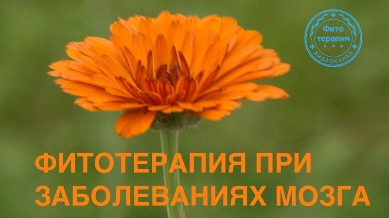 Выпуск 24. Книга О.Д. Барнаулова «Фитотерапия в неврологии»