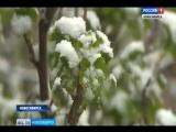 Жаркий понедельник предсказывают синоптики в Новосибирской области