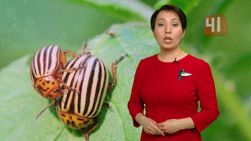 Какие насекомые прячутся в винограде / Новости
