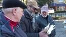 голубів виставка ярмарок м Звенигородка 1 ч